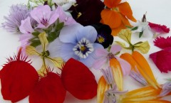 Large-Mixed-Edible-Flowers